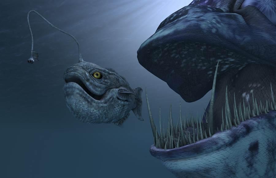 魚肚裡發現透明魚 怪模樣萬人驚呼(示意圖/達志影像)