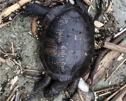放生害死淡水龜 網肉搜竟發現…