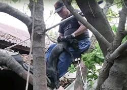 黑狗受困屋頂一周 救援短片引回響
