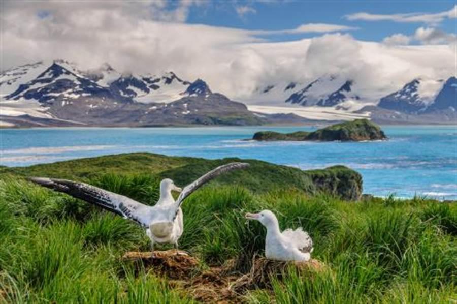 他拍太平洋殘忍照 揭露地球另一面(圖片取自/達志影像)