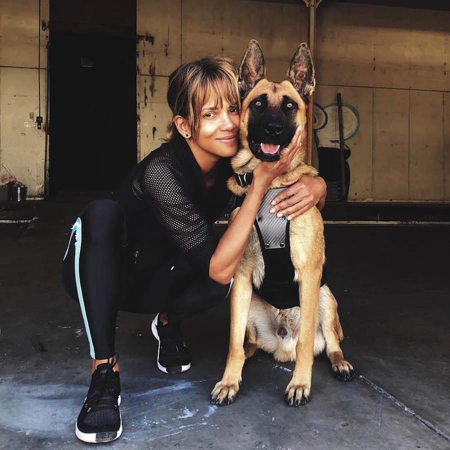 荷莉貝瑞親自上陣訓練片中比利時牧羊犬。(取自荷莉貝瑞IG)