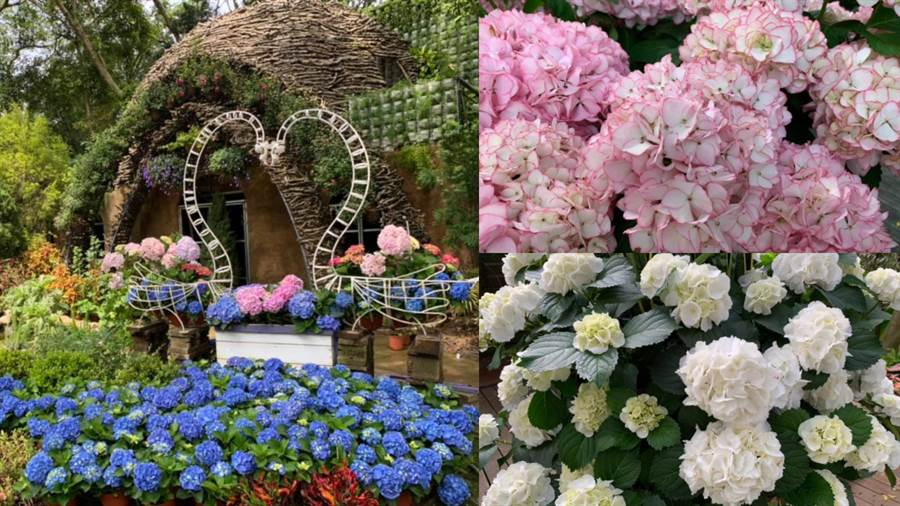 (圖/FB@花露農場 FlowerHome)