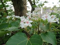 五月雪飄浪漫!深坑小旅賞花、遊溪、品豆腐