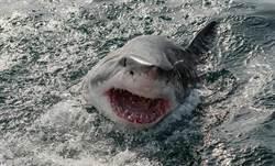 比基尼妹暢遊 渾然不知被巨鯊緊追