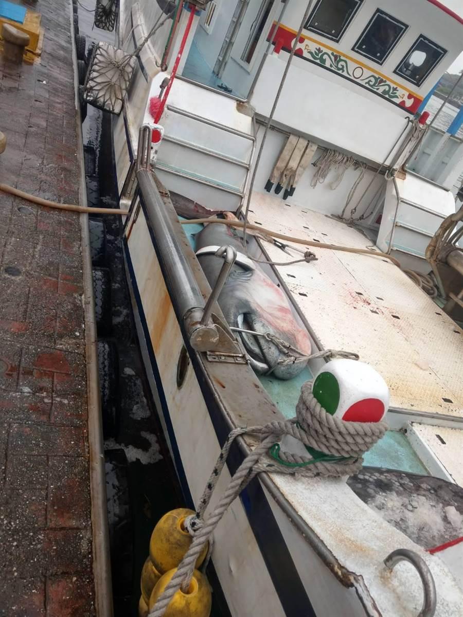 漁業機關進行丈量紀錄,完成通報後交給漁民販售。(許家寧翻攝)