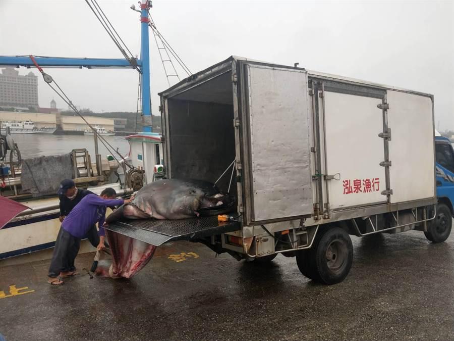 花蓮巨口鯊約拍賣近8萬元,由宜蘭南方澳海產店家標得。(許家寧翻攝)