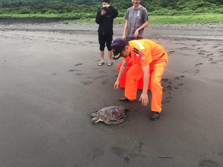 綠蠵龜「壯壯」海放回家。(海巡署提供)