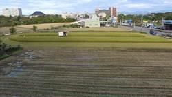 友善耕種 速效稻草分解菌取代稻草燃燒