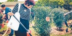 傳承三毛精神 蔡怡種下蔡怡的橄欖樹