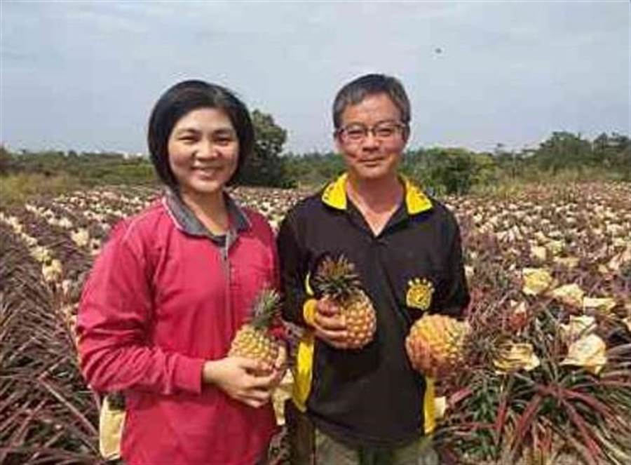 潮州46歲洪進麟(左)自士官退伍後,與擔任護理師的太太潘婷毓(右)開始打造專屬的鳳梨王國。(謝佳潾翻攝)