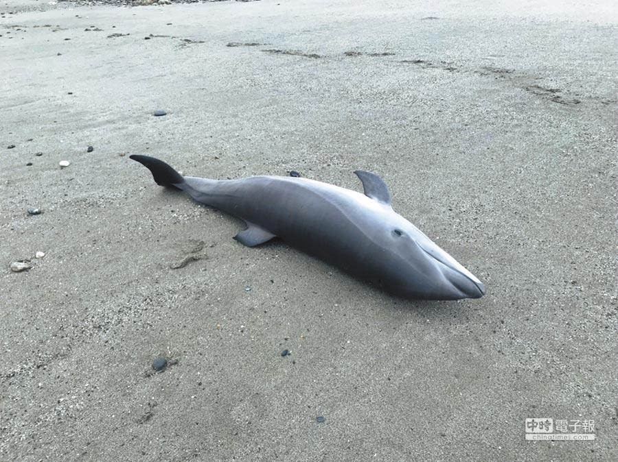弗氏海豚疑似遭大浪打上岸,退潮時被民眾發現。(許家寧翻攝)