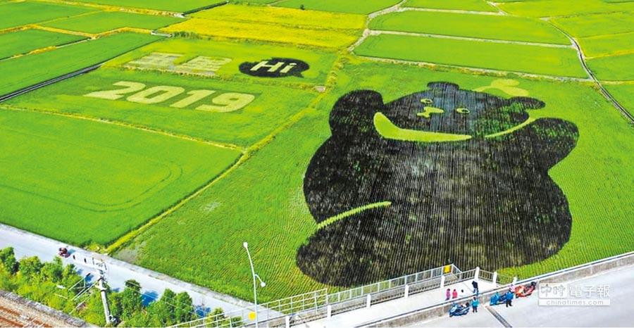 花蓮黑熊稻田壯觀,成為玉里限時打卡景點。(許家寧翻攝)