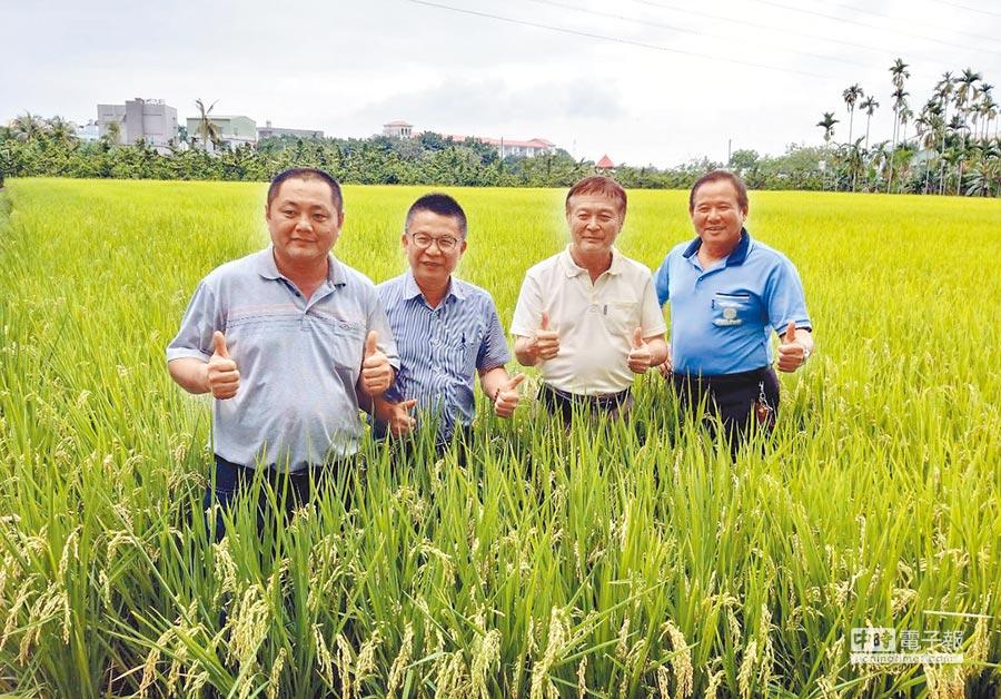 接連梅雨造成部分地區一期稻作輕微倒伏,農糧署南區分署長姚志旺(左二)呼籲農民不要搶收。(潘建志攝)