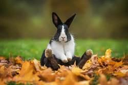 年啃上千兔頭! 品兔師:兔舌口感像鮑魚