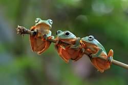 俄驚見「透明蛙」!背後原因讓人憂