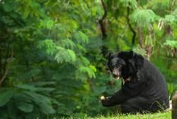 男入山遇熊全家 小熊竟救了他一命