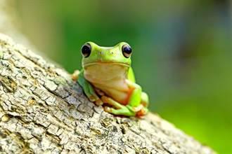 男友和青蛙合照 放大驚見神秘手勢