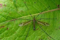 驚見「巨蚊」他嚇壞 網勸:別打牠