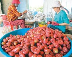 保障農漁民 屏東海陸保險延到月底