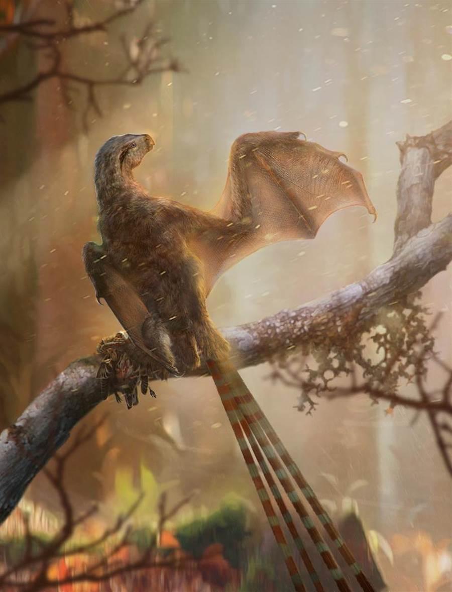 古生物畫家所描繪的蝙蝠恐龍在枝頭上的模樣。(圖/中國科學院)
