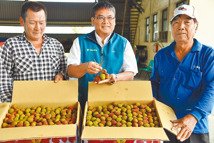 恆春鎮農會首批在台北拍賣的玉荷包創下天價,除平均每公斤賣出400元外,頂級品更高達750元。(謝佳潾攝)