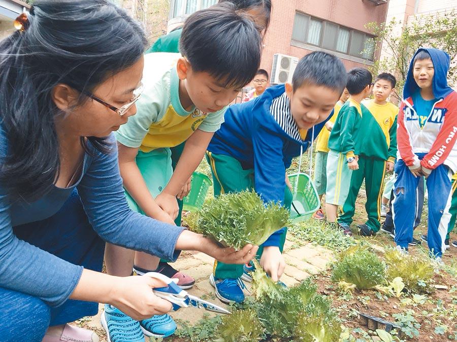 校園營養師除負責營養,還有食農教育、行政工作。(呂筱蟬攝)