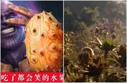 薩諾斯採收這款水果銷量增 網吃完驚呼:太難吃