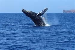 划獨木舟遇巨鯨 近距離互動超震撼