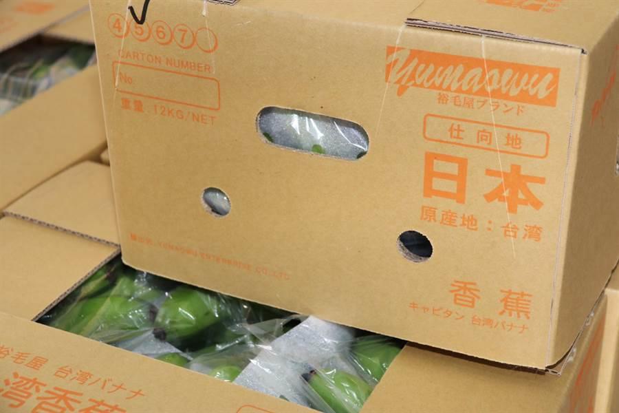 準備銷往日本的台灣香蕉。(圖/農委會提供)