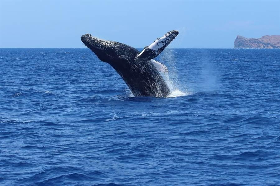 划獨木舟遇巨鯨 近距離互動超震撼(示意圖/達志影像)