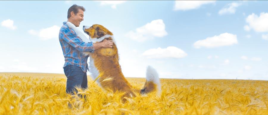 本身就是愛狗人士的丹尼斯奎德回歸出演續集。(UIP提供)