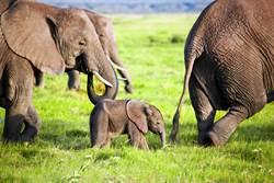 受困小象被救出 依偎挖土機狂感謝