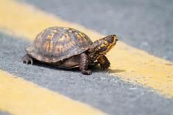 罕見雙頭金龜價值百萬 竟沒人敢買