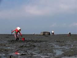 台西潮間帶民眾挖寶「貝」 海巡人員柔性勸離