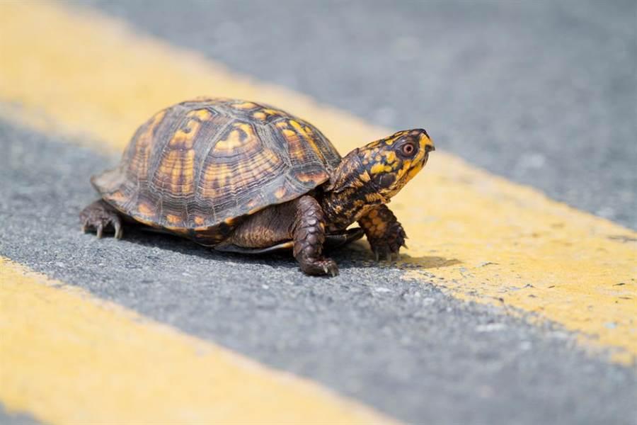 示意圖非當事烏龜。(圖/ 取自達志影像)