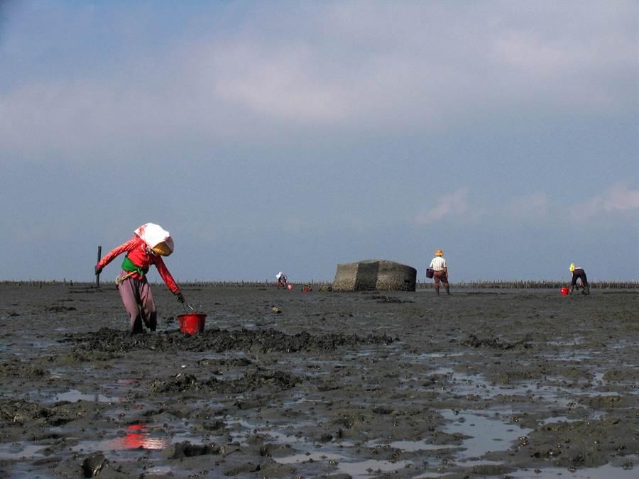 台西沿海潮間帶吸引民眾挖掘文蛤,但也潛藏安全問題。(張朝欣攝)