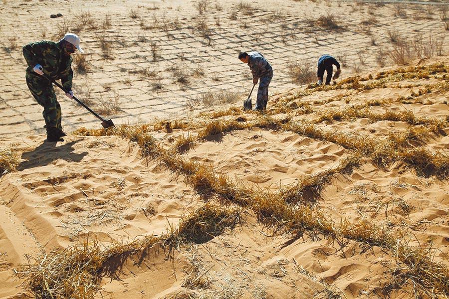 2019年3月12日,民眾在甘肅省臨澤縣乾旱荒漠區用麥草製作阻沙網希望減緩旱化速度。(新華社)