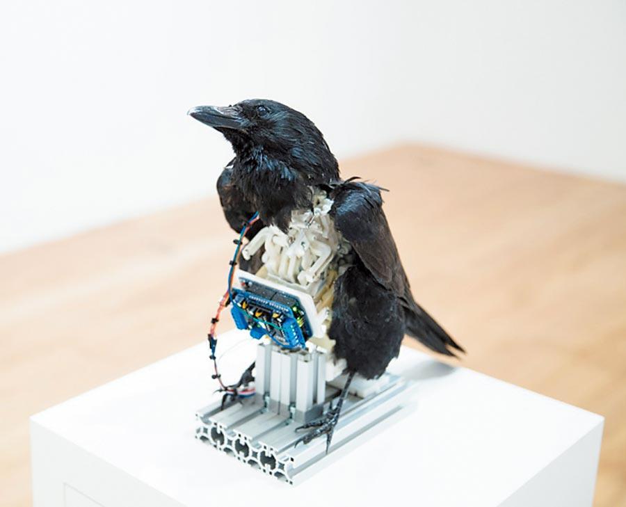 張碩尹的作品〈南冥有鳥,其名為鵬〉。(台北市立美術館提供)
