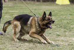 少年幫看管11受訓犬 遭圍攻咬死