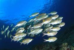 海中超噁寄生蟲!入侵魚舌「定居」