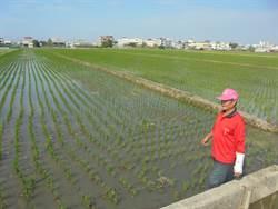 農產保險費議員要求政府全額補助