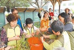 雜草變植物養樂多 竹市推廣