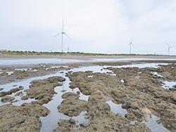 中油完成小燕鷗棲地營造