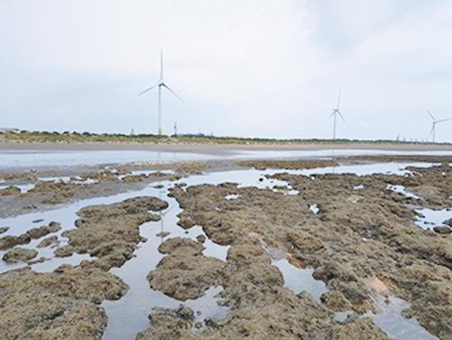 台灣中油公司強調已完成觀塘地區小燕鷗棲地營造,並將持續推動生態保育。(謝瓊雲翻攝)