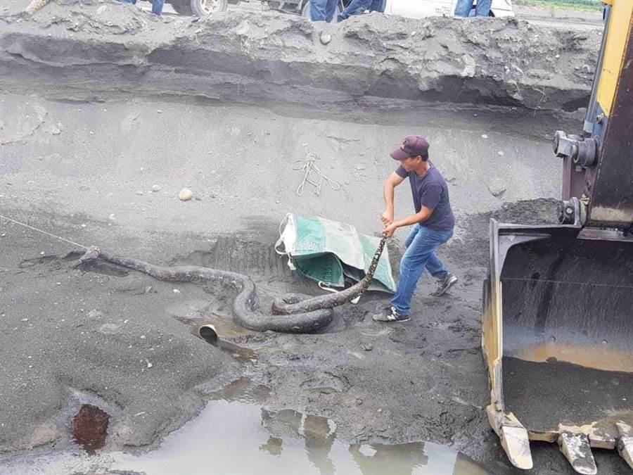 有工人進行疏浚工程時發現巨蟒。(翻攝爆廢公社)
