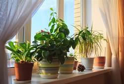 室內盆栽能淨化空氣?結果超乎想像