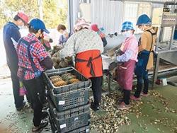 農產外銷 韓4個月完勝去年總量