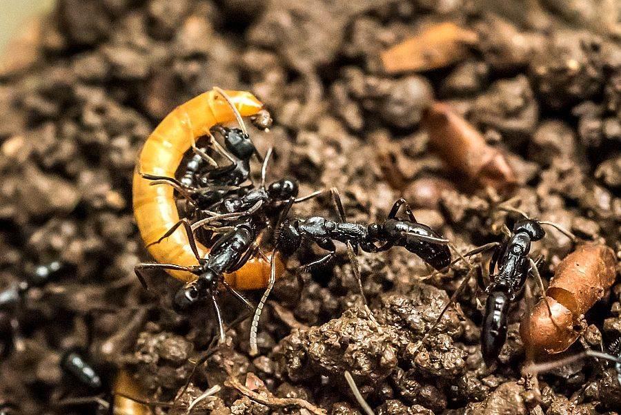 歡迎親子家庭都來動物園開一場蟲蟲派對(螞蟻大軍)。(台北市立動物園提供)