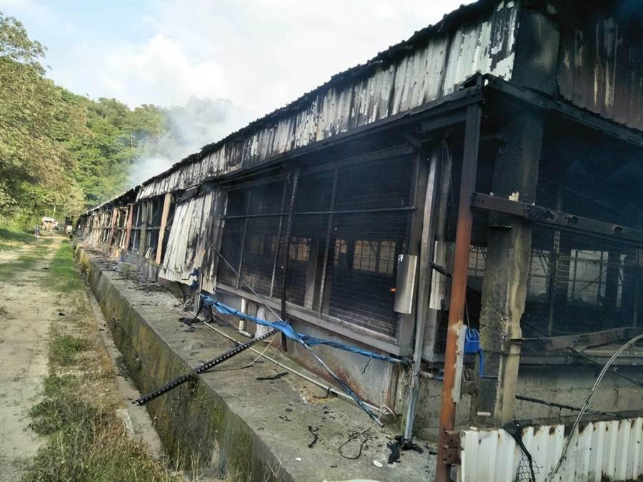雞舍被燒得烏黑一片。(巫靜婷翻攝)
