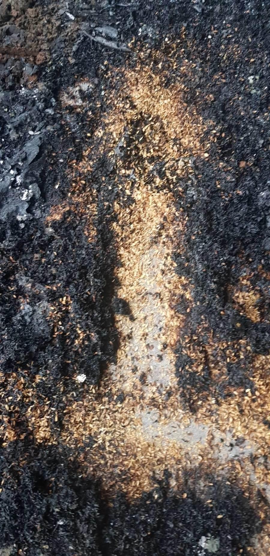 乾燥米糠燒得焦黑。(巫靜婷翻攝)